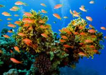 Découvrez des corails à Nha Trang